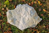 Ammonite (Ammonoidea), stone lying on the grass — Stock Photo