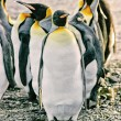 Group of emperor penguins — Stockfoto