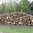 Stock Photo: Forestry Tree Logs.