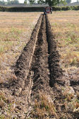 Ploughed Furrow in a Field. — Stock Photo