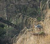 Heron Bird. — Stock Photo
