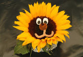 Sunflower Plant Head. — Stock Photo