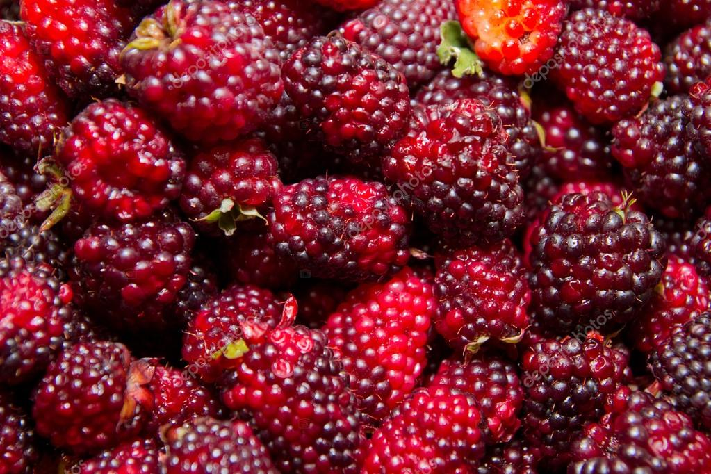 Organic Blackberry berry close up view background — Zdjęcie stockowe #12499158