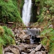 Stock Photo: Waterfall in rainforest