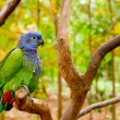 Green and blue parrot inthe wild — Stock Photo #12941394
