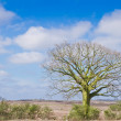 Lonely tree in the dessert with blue skyes - Stock Photo