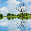Stock Photo: Beautiful wetland view, reflection with tree