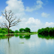 Wetlands with reflection of tree and sky — Stock Photo