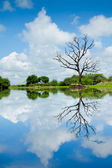Beautiful wetland view, reflection with tree — Stock Photo