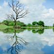 Beautiful wetland view, reflection with tree — Stock Photo #13560880