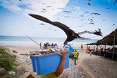 Seagull stealing fish from fisherman — Stock Photo