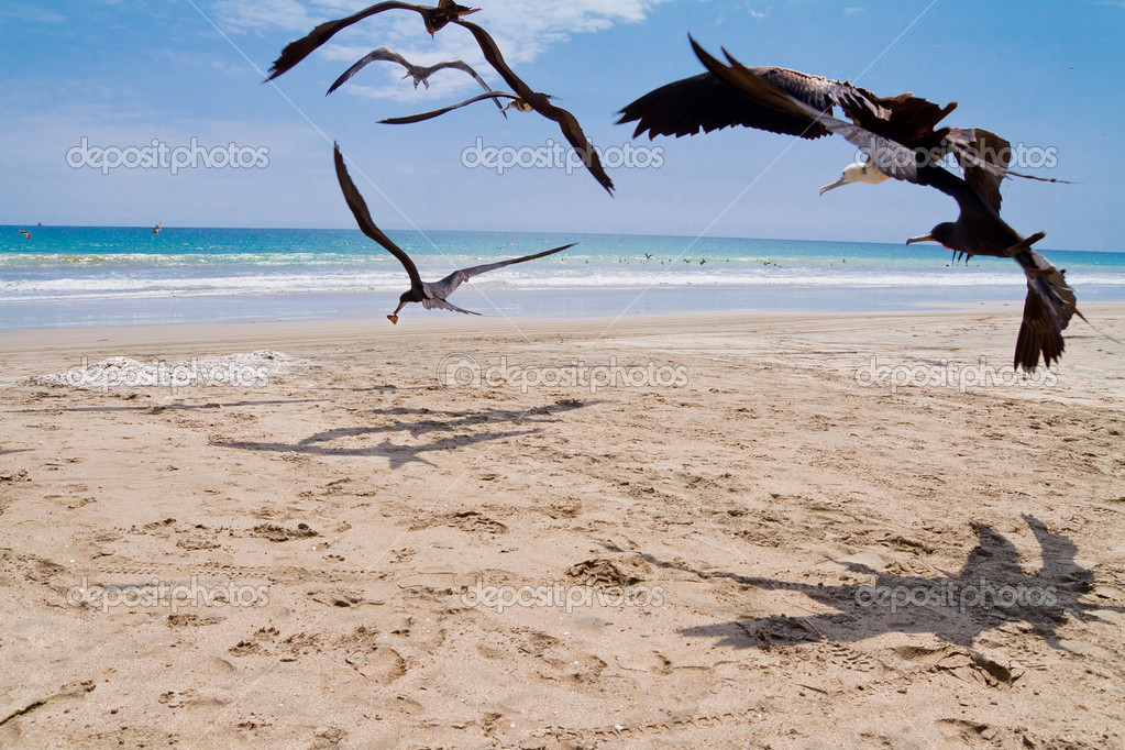 Seagulls chasing for a meal at the beach — Stock fotografie #13593535