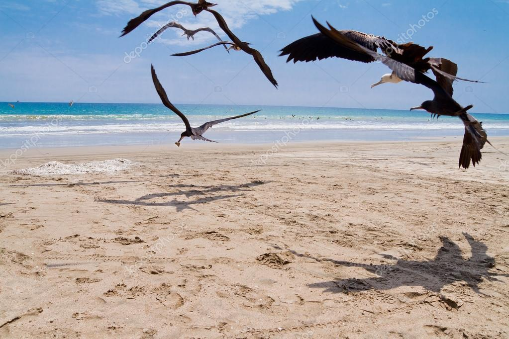 Seagulls chasing for a meal at the beach — Stok fotoğraf #13593535