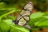 Butterfly posing on grass — Stockfoto
