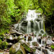 Tropical rain forest with waterfall — Stock Photo #13894954