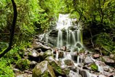 Tropical rain forest with waterfall — Stock Photo