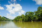 Tropical rain forest river with blue skyes — Stock Photo