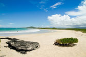 Beach of the Galapagos Islands — Stock Photo