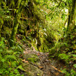 Tropical rainforest in the National Park, Ecuador - Stock Photo