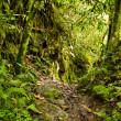 Tropical rainforest in the National Park, Ecuador — Stock Photo #14362707