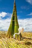 White Flamingo on the islands of Uros Peru — Stock Photo