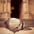 Church and a Pigeon sleeping in front — Stock Photo