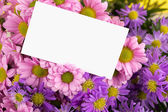 Mother day greeting, blank — Stock Photo