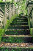 Stone forrest stairs — Stock Photo