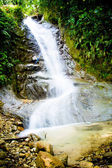 Tropical rain forest with waterfall — Foto Stock