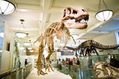 The American Museum of Natural History,  May 15, 2011,  New York — Stock Photo