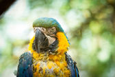 Exotic bird that experienced Animal Cruelty — Stock Photo