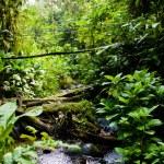 Rainforest — Stock Photo #30428729