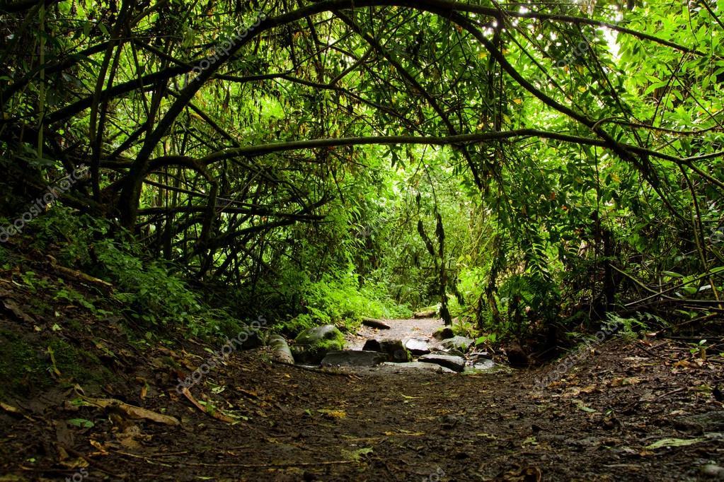 泥泞的道路,在雨林里,两边的树木 — 照片作者 pxhidalgo