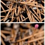 Matches set — Stock Photo