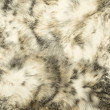 Animal print Background Texture — Stock Photo #34621319
