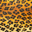 Stock Photo: Animal print Background Texture