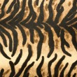 Animal print Background Texture — Stock Photo
