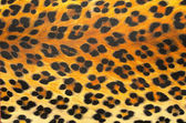 Animal print hintergrundtextur — Stockfoto
