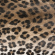 Animal skin, pattern — Stock Photo