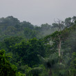 Morning fog in dense tropical rainforest, Yasuni, Ecuador — Stock Photo #42420485