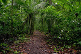 Walking trail in amazon tropical forest — Stock Photo