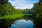 Amazon landscape — Stock Photo