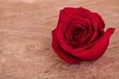 Red rose wth copyspace for sign — Stock Photo