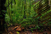 Subtropical forest — Stock Photo