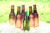 Beer and ice,  out of focus grass with an intense shinny light — Stock Photo
