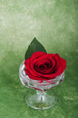 Rose in a vase on a artsy background with copyspace — Stock Photo