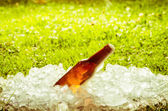Beer in a pile of ice outside — Stock Photo
