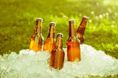 Cold beer on crushed ice cubes outside — Stock Photo