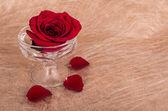 Rosso rosa wth copyspace per segno — Foto Stock