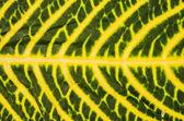 Leaf background close up — Stock Photo